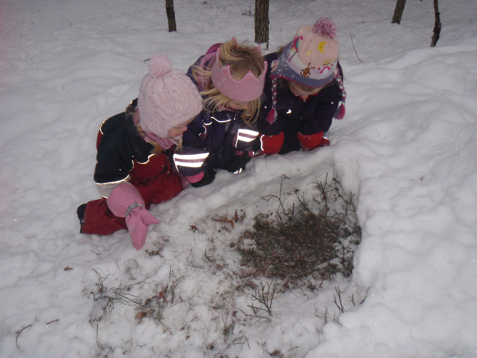 spor rådyr snø